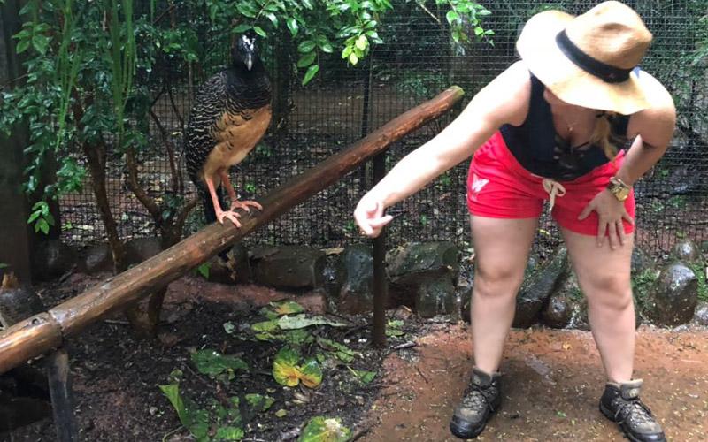 Tudo sobre o Parque das Aves em Foz do Iguaçu: preço, dicas e melhor horário para um passeio para fotos inesquecíveis