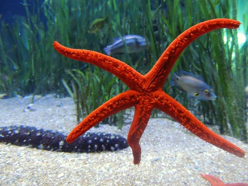 Não tire selfies com estrelas do mar