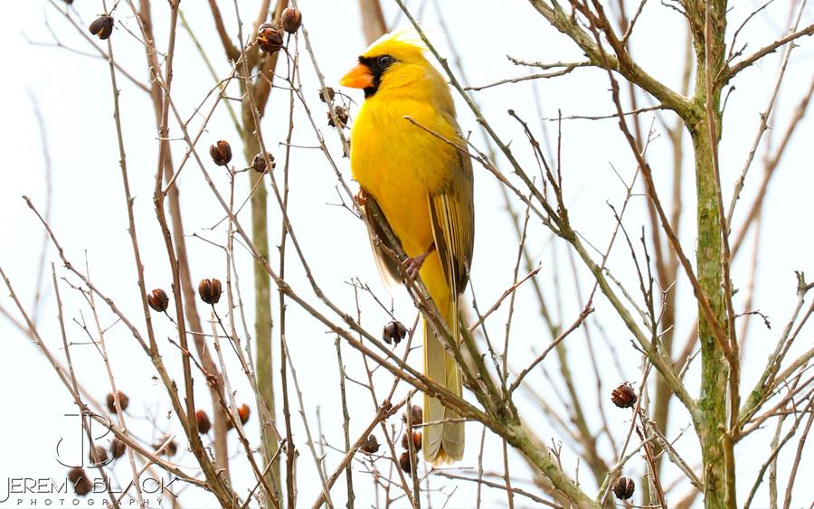 Mulher encontra pássaro extremamente raro em seu quintal
