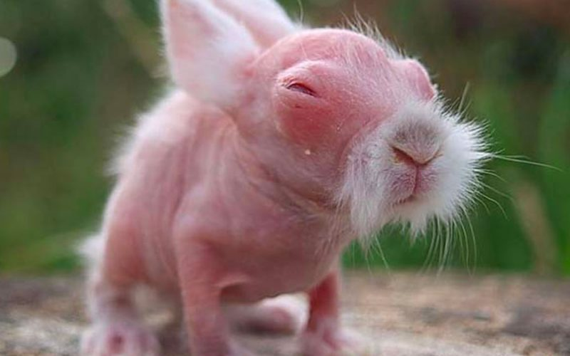 Animais que parecem totalmente diferentes sem o pêlo