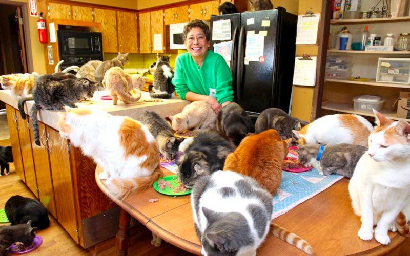 Conheça a mulher que tem mais de 1000 gatos