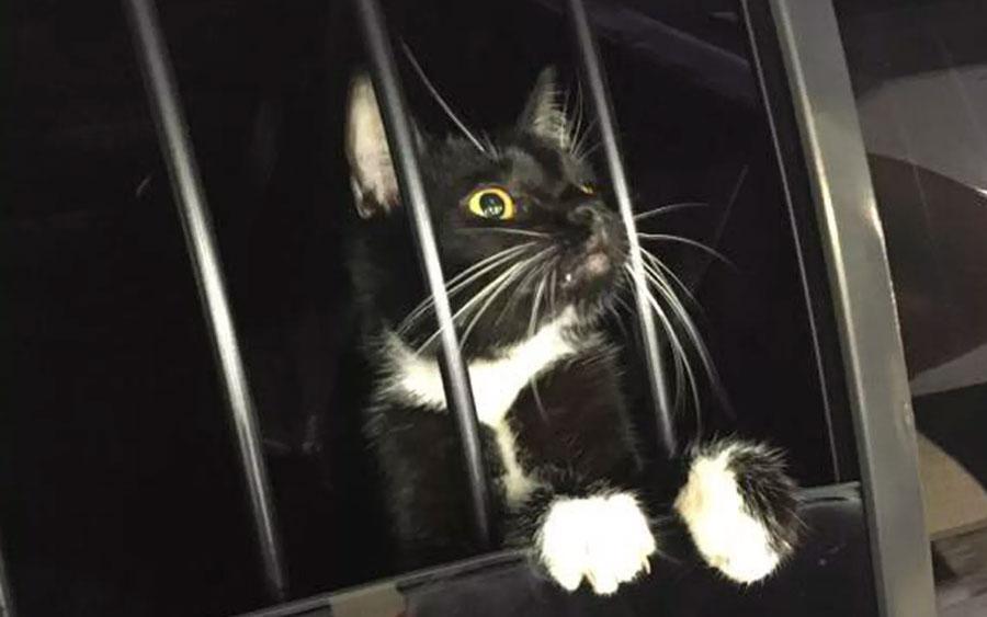 Família confunde gato com bandido, chama a polícia e o animal quase acaba preso