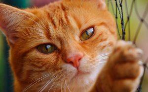 Seu gato te ama tanto quanto seu cachorro, revela estudo