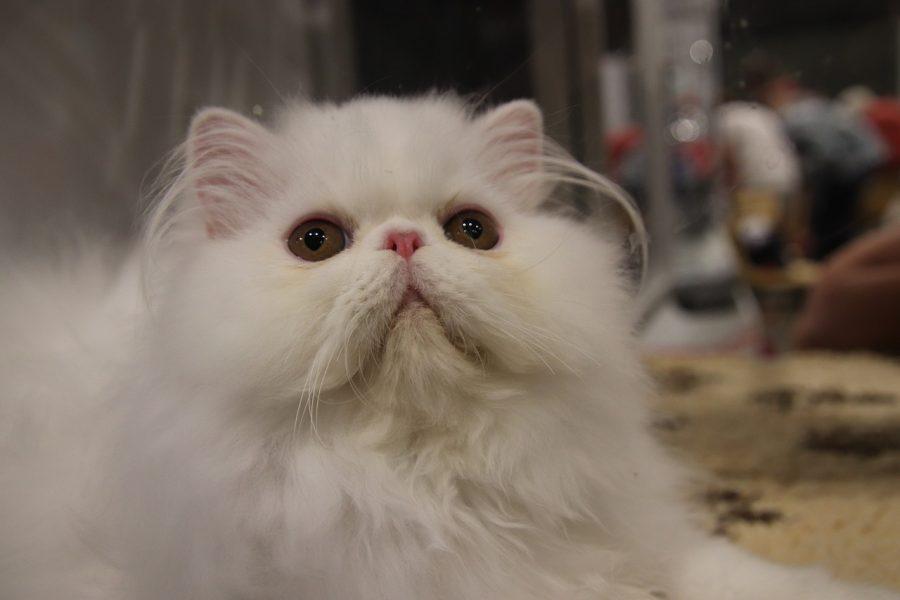 Amor e carinho entre gatos e pessoas