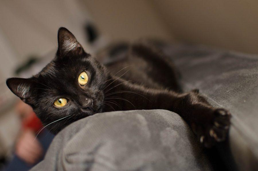 Gatos são mais amáveis do que era imaginado