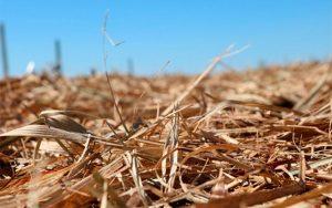 Pesquisa revela aumento na demanda de fertilizantes no Brasil até 2050