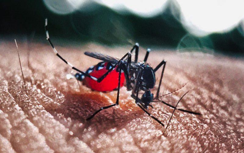 Pesquisas revelam que vírus Zika traz prejuízos pra crianças e adultos