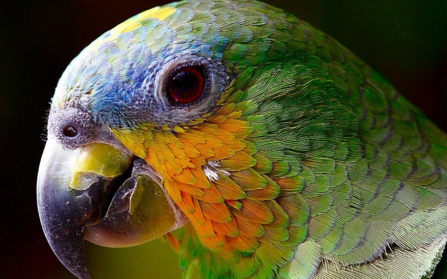 Conheça os destinos selvagens do Amazonas