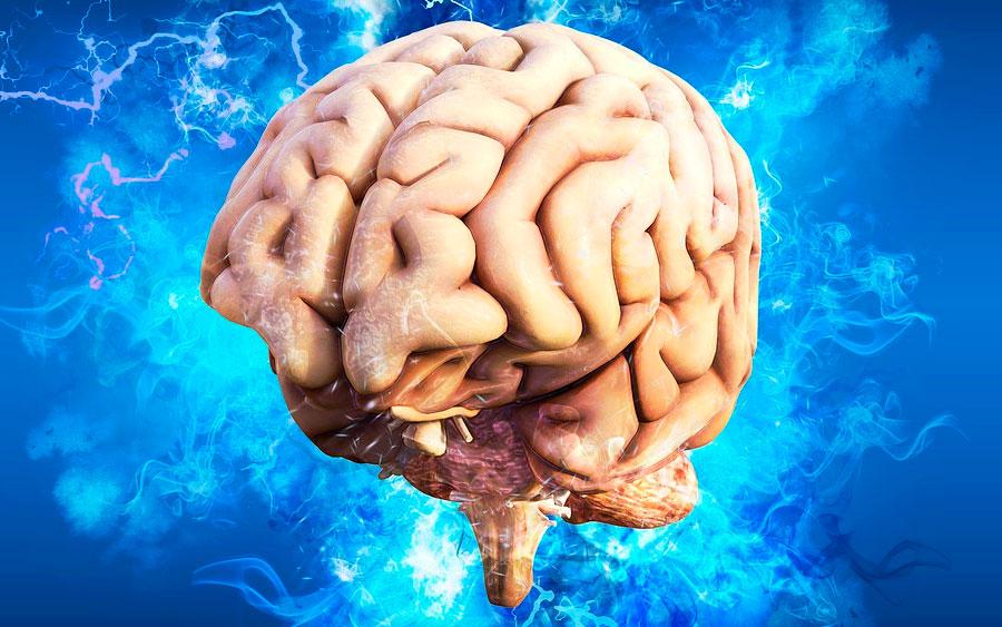 Cérebro reanimado é um passo a mais para a imortalidade