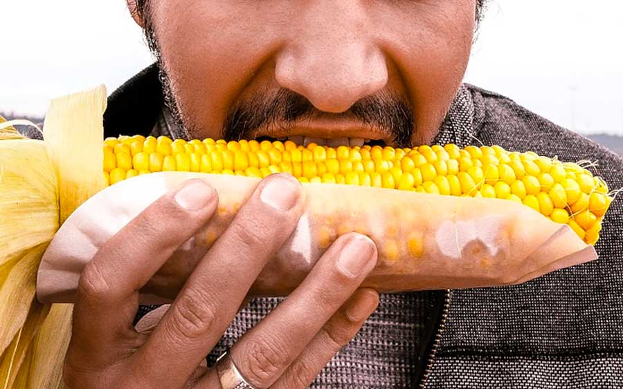 Variedades do milho transgênico podem ser boas para a humanidade