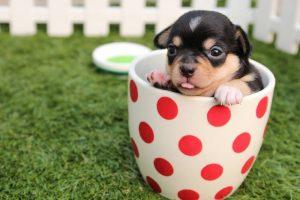 Com quanto tempo o filhote de cachorro pode começar a tomar agua?