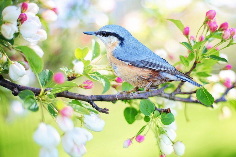 As vibrações sonoras produzidas provocam a mudança de postura das aves e diminuição de sua produtividade