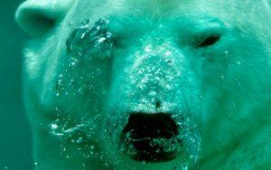 Segundo a ONU, oceanos ficarão mais quentes e ácidos
