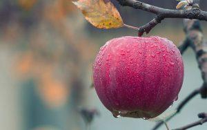 A importância dos defensivos agrícolas