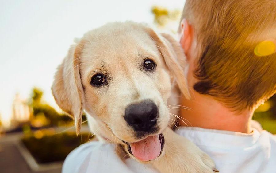 O seu cachorro te ama?