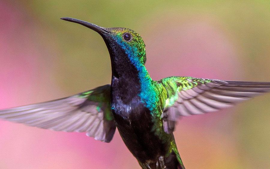 Lindas fotos de animais que vão te fazer refletir sobre a vida