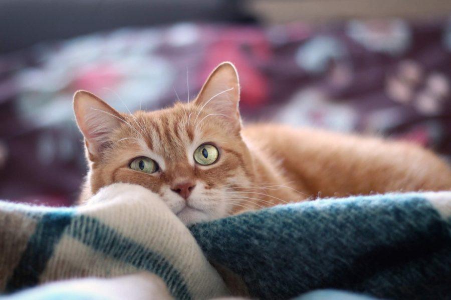 O gato doméstico mais antigo foi encontrado numa sepultura no Chipre com mais de 9000 anos.