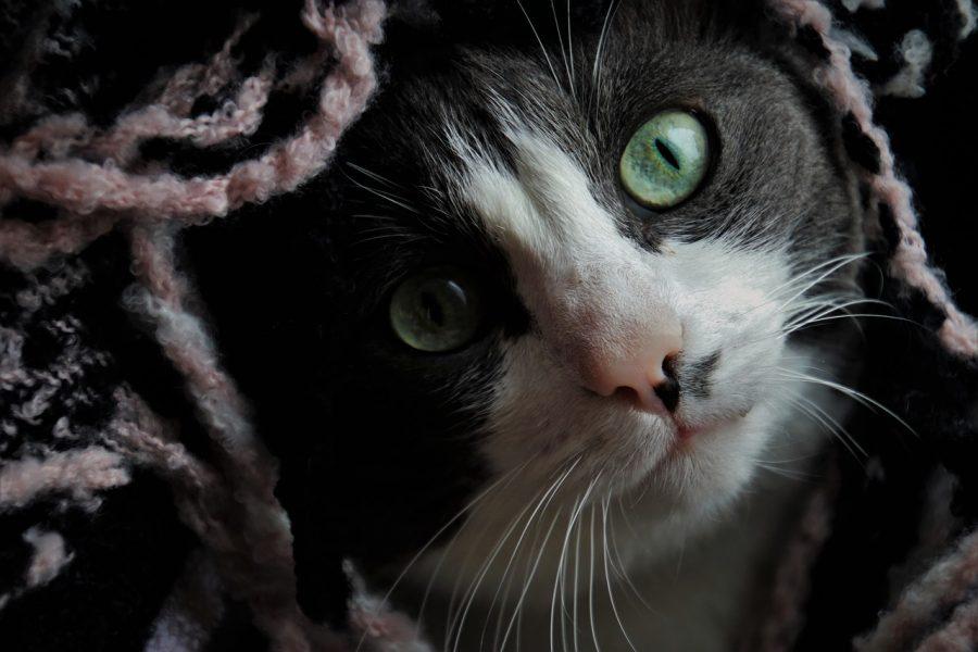 Em média um gato passa 2/3 do dia dormindo. Isso significa que em 9 anos de vida, apenas está acordado 3 anos.