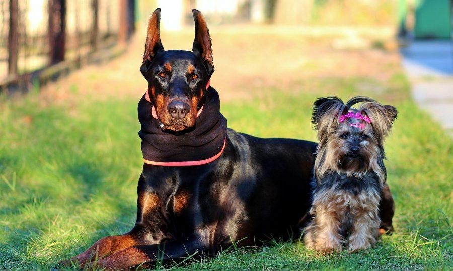 Antes de iniciar o corte dos pelos de seu cachorrinho, primeiro tenha certeza se ele não está com nenhuma alergia