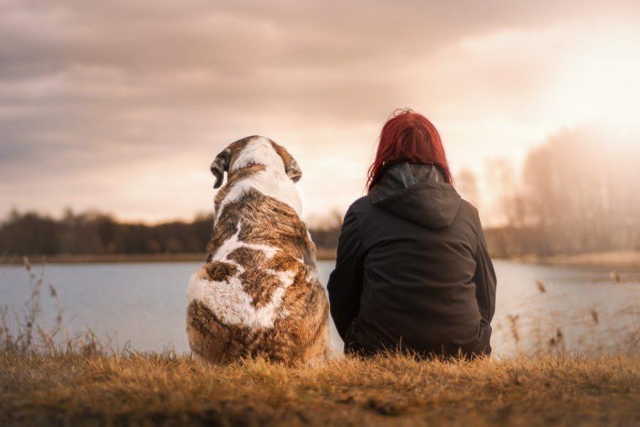 Não seria incrível saber o que meu cão está pensando?