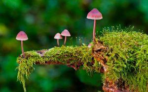 A economia pode aprender muito com os fungos