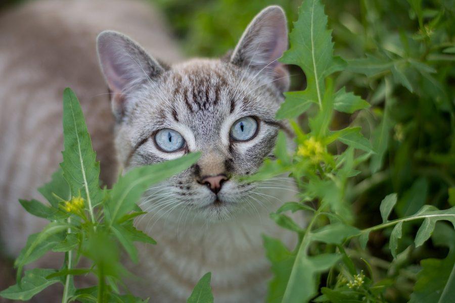 Um gato faz cerca de 100 sons diferentes, enquanto um cão faz cerca de 10.