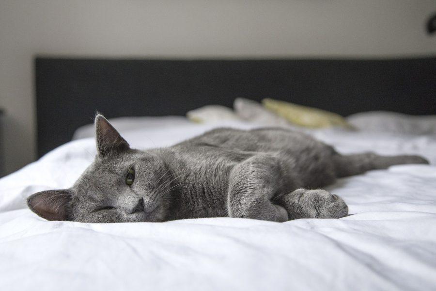 Os seus animais fazem parte do seu dia a dia? Ele também usam seu quarto? Pense nisso!