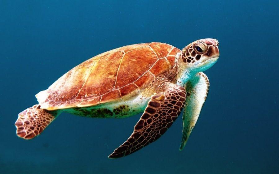 Para preservarmos o meio ambiente marinho, precisamos estudar mais sobre como tudo acontece