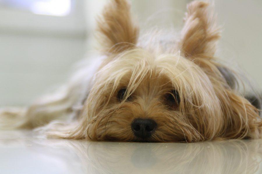A tosa faz parte dos cuidados com a saúde e higiene do seu pet