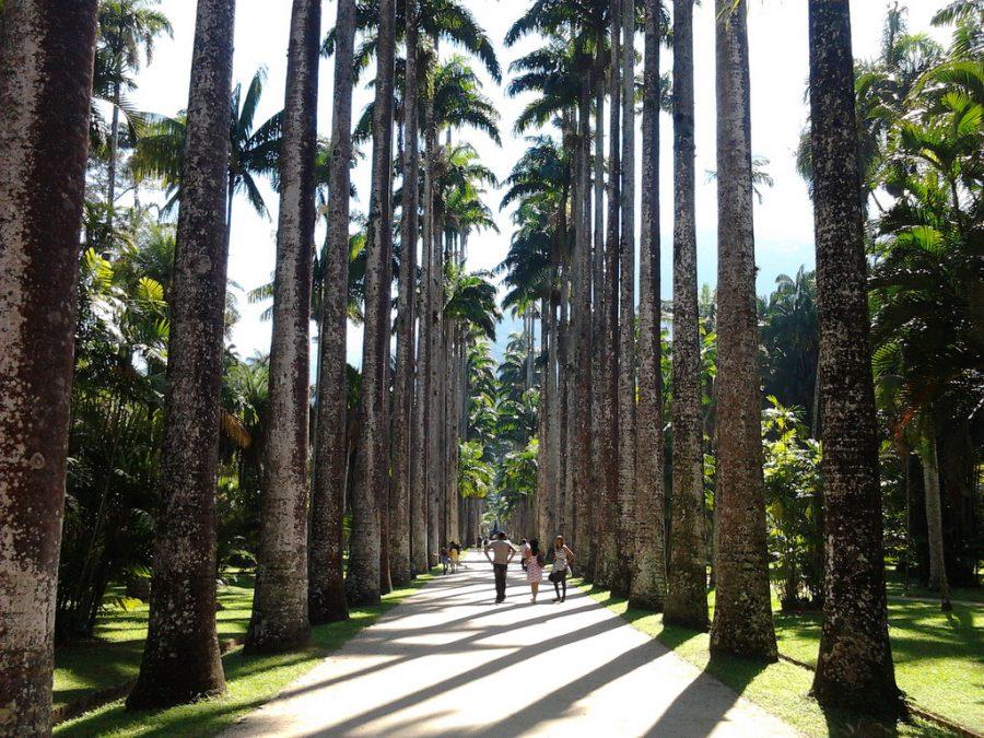 Jardim Botânico do Rio de Janeiro (foto: feliven / wikimedia)