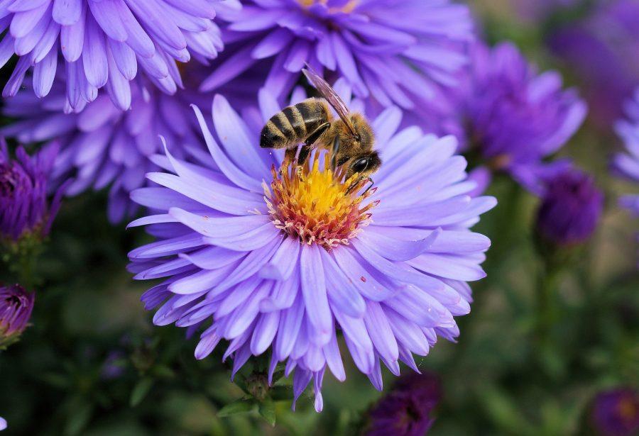 Apenas as abelhas fêmeas trabalham. A única missão dos machos é fecundar a rainha. Depois de cumprirem essa missão, eles não são mais aceitos na colmeia. Ficam de fora até morrer de fome