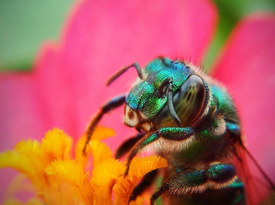 O que está matando as abelhas?