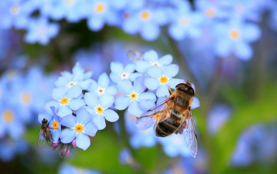 As abelhas estão morrendo em número recorde
