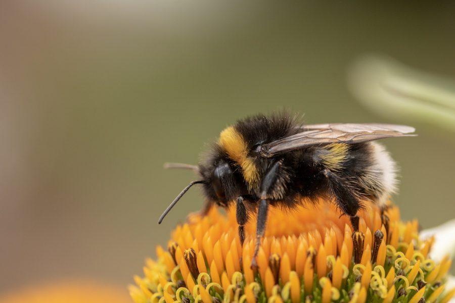 Uma abelha produz 5 gramas de mel por ano. Para produzir um quilo de mel, as abelhas precisam visitar 5 milhões de flores.