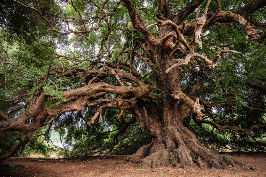 A maior parte da floresta vive à sombra das gigantes que compõem o dossel mais alto