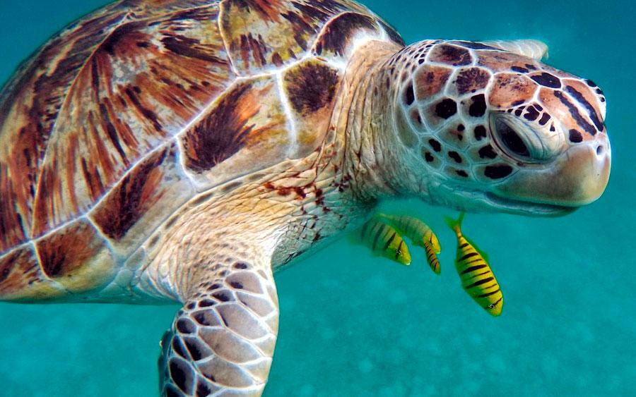 Como o casco das tartarugas evoluiu