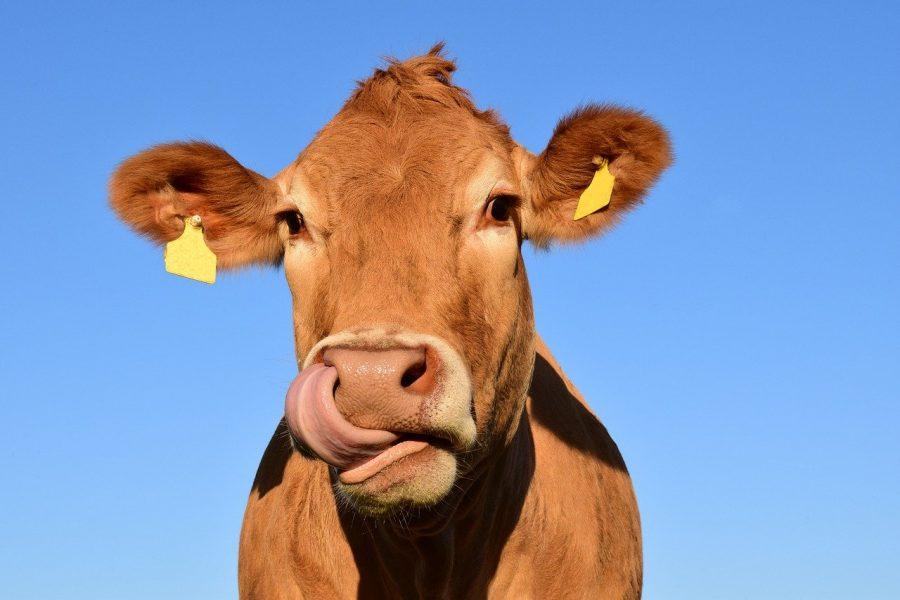 Depois da produção de energia, a criação de animais é o segundo maior emissor de gases que alteram a atmosfera.