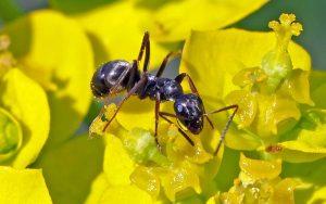 As formigas são um grande assunto