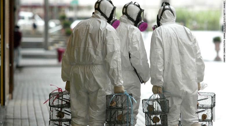 As autoridades de Hong Kong colocam armadilhas para ratos em um esforço para determinar se os ratos contribuíram para um surto de pneumonia em 2003.