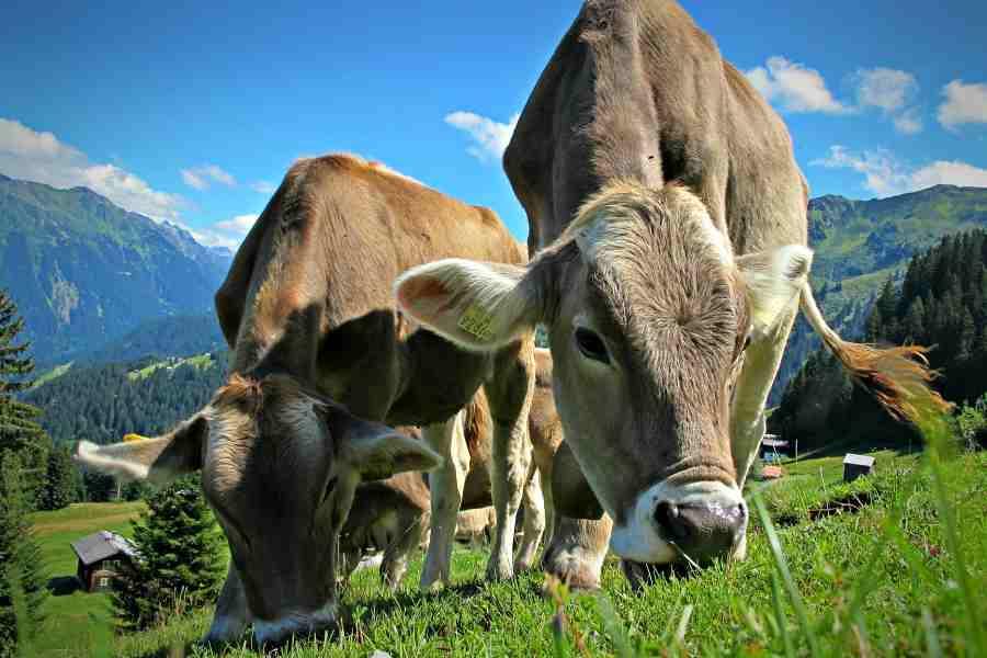 A carne bovina é muito consumida Brasil afora, agora uma novidade tecnológica pode favorecer ainda mais o comércio deste alimento. (Foto: reprodução)