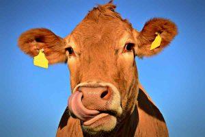 Uboi: novo app para revolucionar o transporte de gado