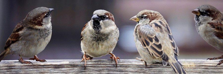 Passer é um gênero da família Passeridae, também conhecido como pardal. O gênero inclui o P. domesticus e o P. montanus, algumas das aves mais comuns no mundo. São pequenos pássaros com bicos grossos para comer sementes, e são na sua maioria de cor cinza ou marrom. Nativo no Velho Mundo, algumas espécies foram introduzidas por todo o mundo.
