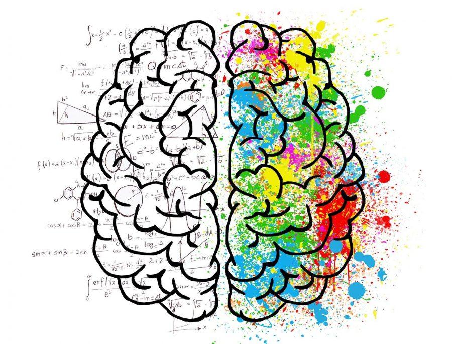 Nosso cérebro é um conjunto perfeito de estruturas que se interligam e reproduzem então a sua função
