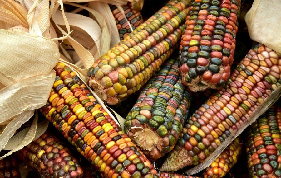 No mercado existem uma grande variedades dessas sementes