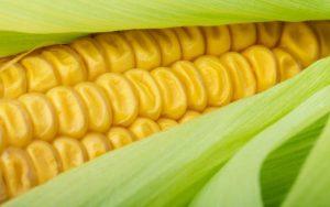 Tudo sobre o milho e suas riquezas