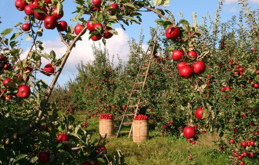 É possível que daqui a algum tempo, essas evoluções agrícolas possam proporcionar uma alimentação muito mais saudável