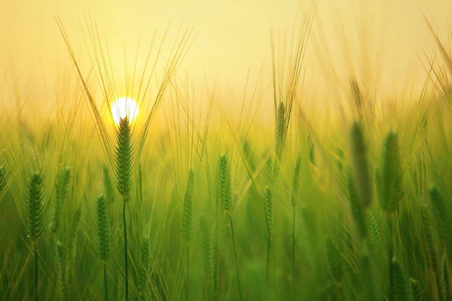 Vamos rever alguns conceitos de cultivo e colheita para falar um pouco mais sobre isso