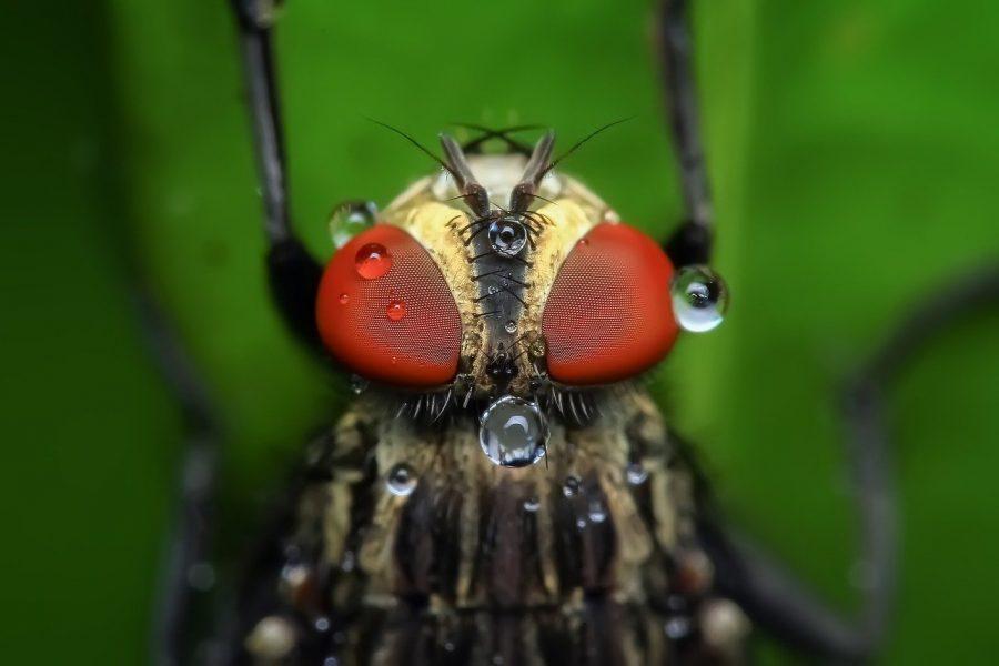 Um grupo de pesquisadores da Universidade da Flórida conduziu um estudo sobre o assunto. Analisando mosquitos que haviam voado em lixeiras e passado pela porta de alguns restaurantes, eles descobriram que existe, sim, relação entre a presença desses insetos e o desenvolvimento de algumas doenças.