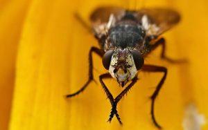 Posso comer alimentos que a mosca pousou?