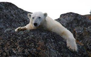 Aquecimento global: o planeta está ficando mais quente?